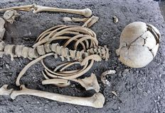 Human Skull and Skeleton Bones. Discovered in old grave stock images