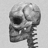 Human skull sketch Royalty Free Stock Image