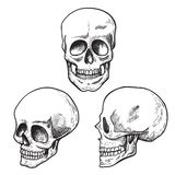 Human skull sketch set, medical and science stock photo