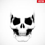 Human skull in sketch style Stock Photos
