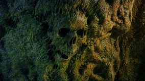 Human Skull In Slimy Cave Wall stock video