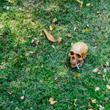 Human skull smoking the cigarette  on the grass background Royalty Free Stock Photos