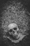 Human skull smoking the cigarette on grass background , Vintage black white tone , still life photography style.  stock photo