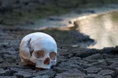 Human skull on the soil of dried out lake Stock Images