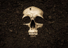 Human Skull. In soil,Horror background for Halloween concept and book cover ideas Stock Photo