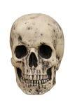 Human Skull. Royalty Free Stock Image