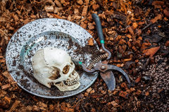 Human skull on stainless plate and coconut coir fiber Stock Photography