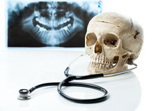 Human skull with stethoscope. Royalty Free Stock Image