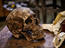 Human skull in a Studio. Human skull in an art workshop, a fragment of the staged still life stock images