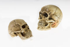 Human skull. Two heads turned to look each other, on a white background Royalty Free Stock Photography