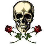 A human skull with two roses Royalty Free Stock Images