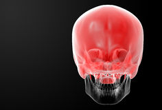 Human Skull. Upper half. Royalty Free Stock Images