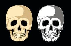 Human skull vector Stock Image