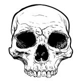 Human Skull Vector Art. Hand drawn illustration. Human Skull Vector Art. Detailed hand drawn illustration of skull on background. Tattoo style skull art. Grunge Stock Photo