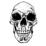Human Skull Vector Art. Hand drawn illustration. Human Skull Vector Art. Detailed hand drawn illustration of skull on background. Tattoo style skull art. Grunge Stock Photos