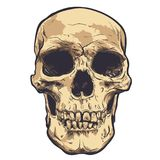 Human Skull Vector Art. Hand drawn illustration. Human Skull Vector Art. Detailed hand drawn illustration of skull on background. Tattoo style skull art. Grunge Royalty Free Stock Photography