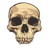 Human Skull Vector Art. Hand drawn illustration. Human Skull Vector Art. Detailed hand drawn illustration of skull on background. Tattoo style skull art. Grunge Stock Images