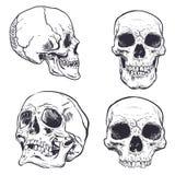Human Skull Vector Art. Hand drawn illustration. Human Skull Vector Art. Detailed hand drawn illustration of skull on background. Tattoo style skull art. Grunge stock illustration