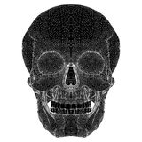 Human Skull Vector Stock Photography