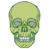 Human Skull 03 royalty free illustration