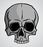 Human Skull vector Stock Photo