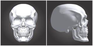 Human Skull Vector Royalty Free Stock Image