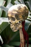 Human Skull of Victim Royalty Free Stock Images