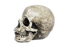 Human skull view royalty free stock photo