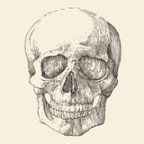 Human skull, vintage illustration, engraved. Retro style, hand drawn, sketch Stock Photo