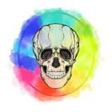 Human skull on the watercolor color circle background. Stock vector illustration.r Stock Photos