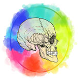 Human skull on the watercolor color circle background. Stock vector illustration.r Stock Photography