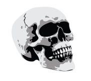 Skull. A human skull on white background royalty free illustration