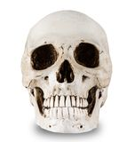 Human skull on a white background. Stock Photography