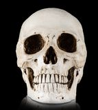 Human skull on a white background. Royalty Free Stock Photo