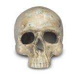 Human skull. On  white background Royalty Free Stock Photos
