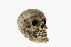 Human skull. On  white background Royalty Free Stock Image