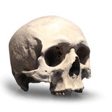 Human skull. Human skull on white background Royalty Free Stock Images