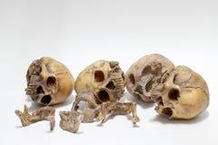 Human skull  on white background Stock Photos