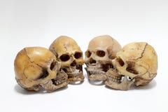 Human skull  on white background Stock Image