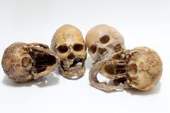 Human skull  on white background Stock Images