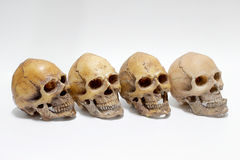 Human skull  on white background Royalty Free Stock Photography