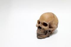 Human skull  on white background Stock Photo