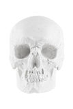 Human skull on white background Royalty Free Stock Photo