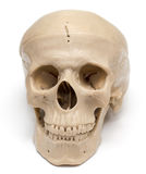Human skull on a white background. A photo Royalty Free Stock Image