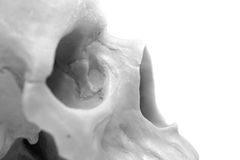 Human skull on a white background. A photo Royalty Free Stock Photos