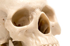 Human skull on a white background. A photo Royalty Free Stock Photography