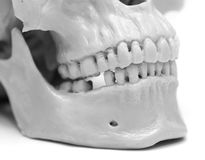Human skull on a white background. A photo Stock Photo
