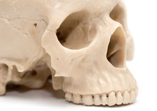 Human skull on a white background. A photo Royalty Free Stock Images