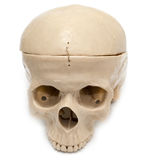 Human skull on a white background. A photo Stock Photography