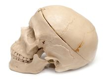 Human skull on a white background. Photos in the studio Stock Photo